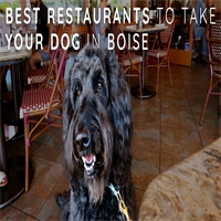 Best Restaurants to Take Your Dog in Boise