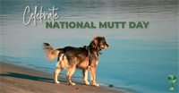 Celebrate National Mutt Day with the Idaho Humane Society