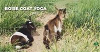 Experience Boise Goat Yoga