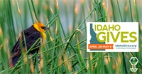 Idaho Gives Extends Donation Week: How to Donate & Get Involved
