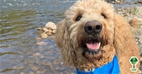 Adventure-Dog Tips, Tricks, and Trips in the Treasure Valley