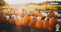 Your Guide to Have the Best Fall in Boise