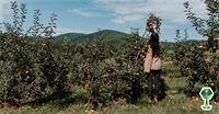 Where To Go Apple Picking In The Treasure Valley