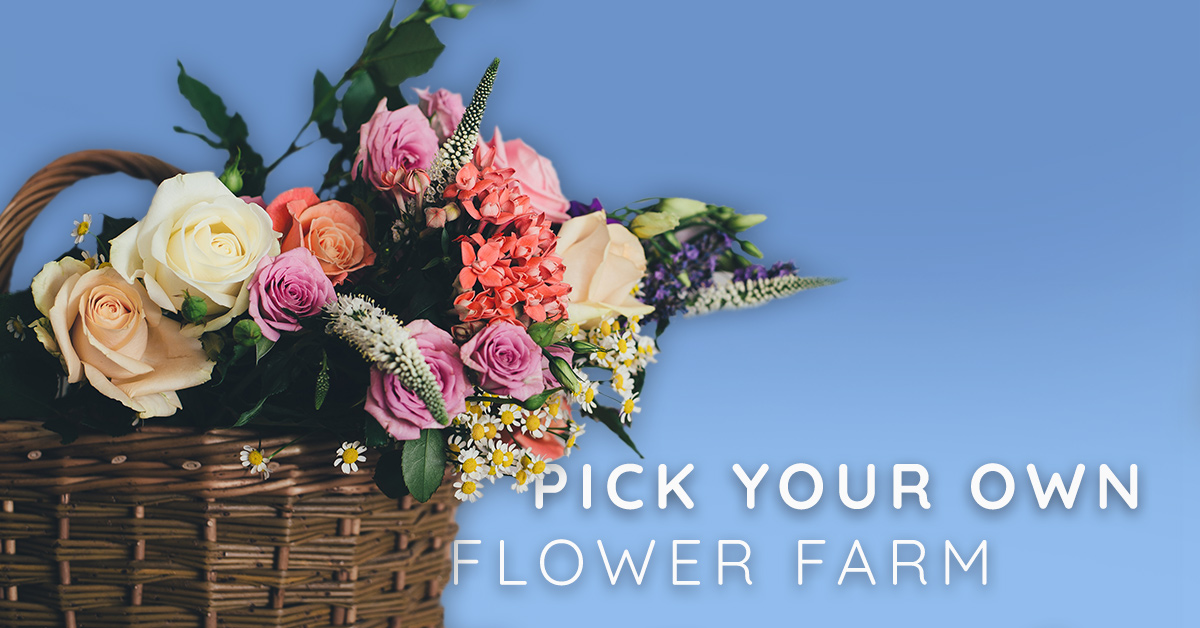 There is a pick your own flower farm in Idaho that will take your breath away!