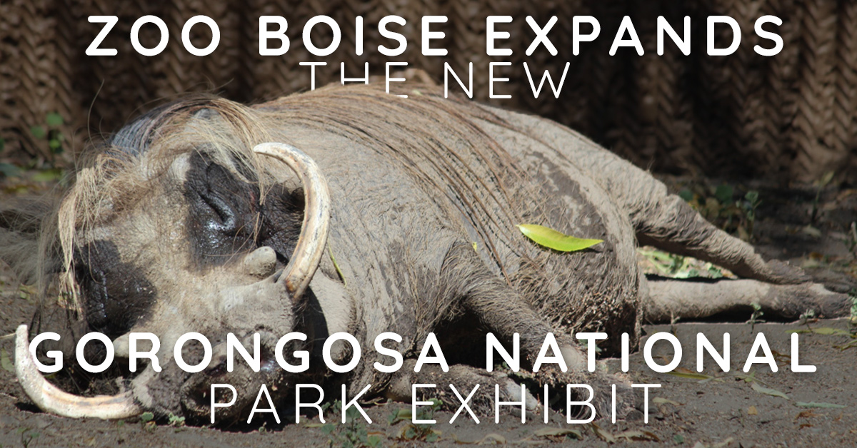 Zoo Boise Expands - The New Gorongosa National Park Exhibit