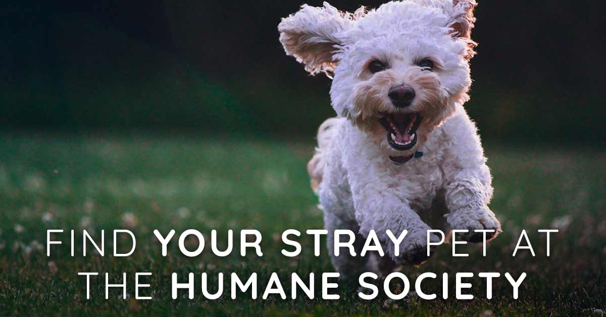 Find Your Stray Pet at the Idaho Humane Society