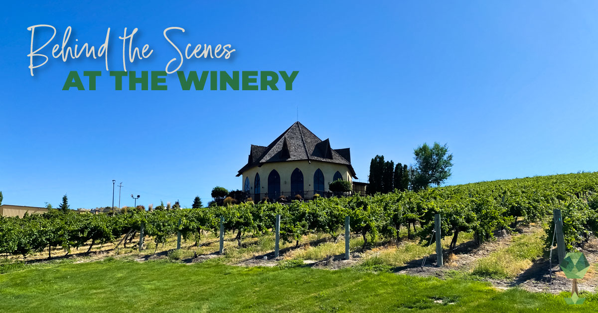 An Insider's Look: Sawtooth Winery and Ste. Chapelle Take Totally Boise Behind the Scenes!
