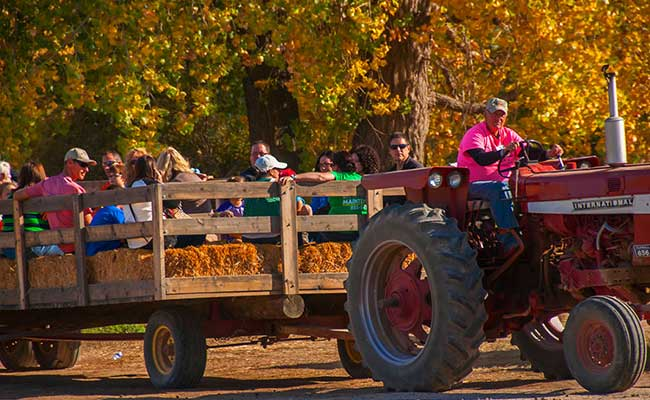 boise farmstead fall